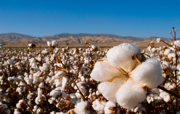 Pic: Cotton USA