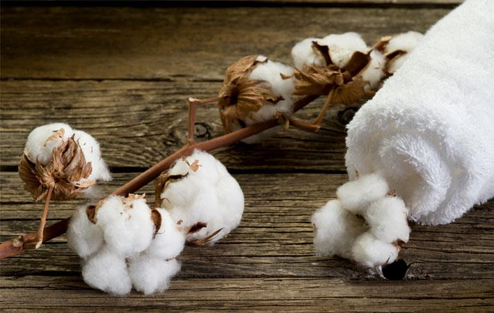 Cotton sowing in Pak rises by 14%
