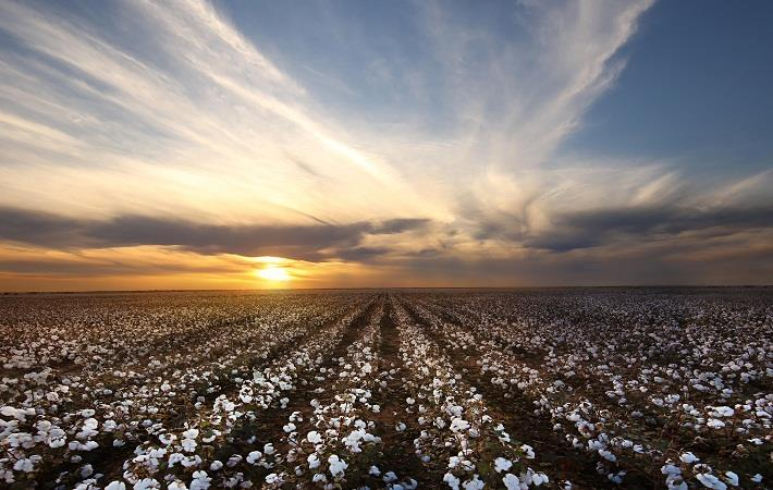 ICAC to host cotton research conference in October
