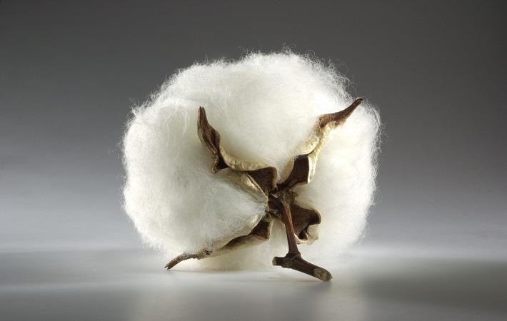 Pic: International Cotton Association (ICA)