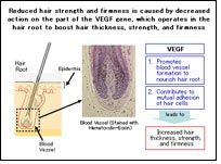 Effects of aging on hair