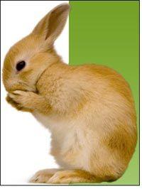 Natural color rabbit fibre to be next sensation