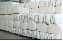 Lowest cotton output registered since early 60's