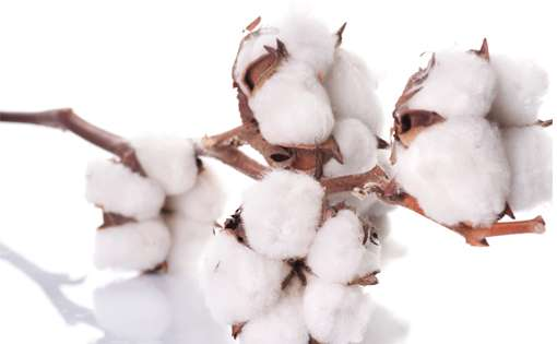 How Yarn Prices and Cotton Costs Changed During 2001-05?