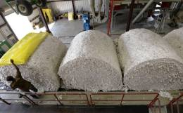 Soaring cotton prices benefits polyester fiber consumption