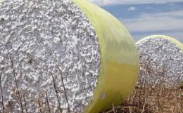 The International Cotton Market: Major Challenges