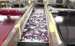 Fabrics Produced from Sansevieria Roxburghiana