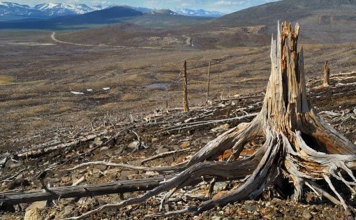 Fashionable fabrics leading to deforestation