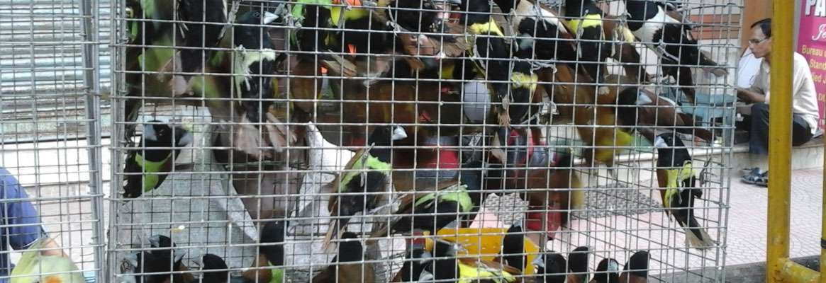 Indian PET Market