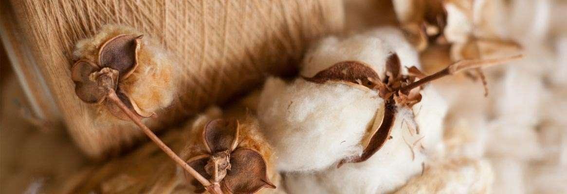 Organic Cotton – An Overview