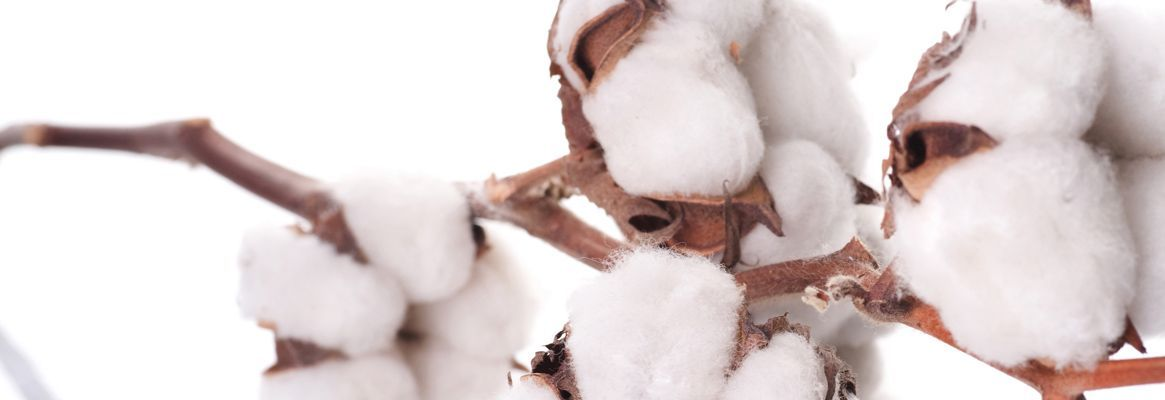 Quality issues for Australian cotton from the mill perspective