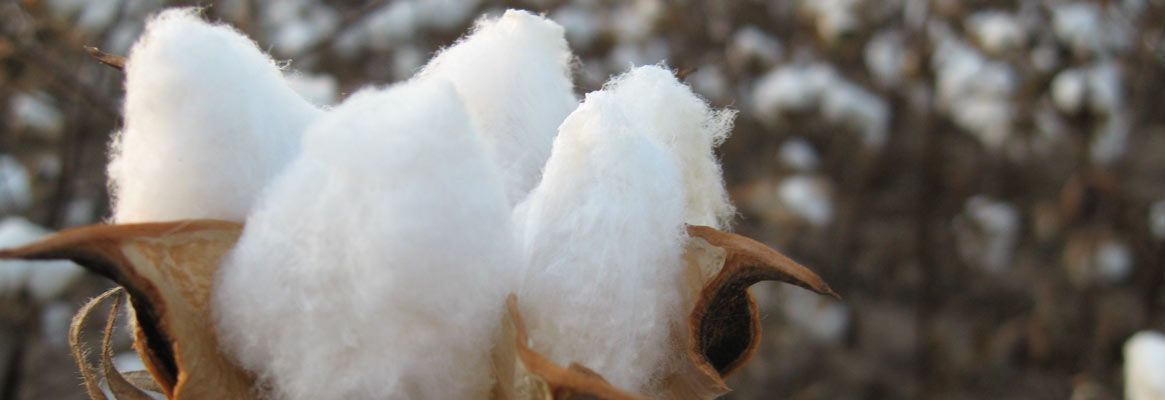 Sustainable fashion: Polyester vs cotton