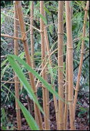 origin of bamboo fiber essay The gin made it possible to supply large quantities of cotton fiber to the fast-growing textile industry within 10 years, the value of the us cotton crop rose from $150,000 to more than $8 million.