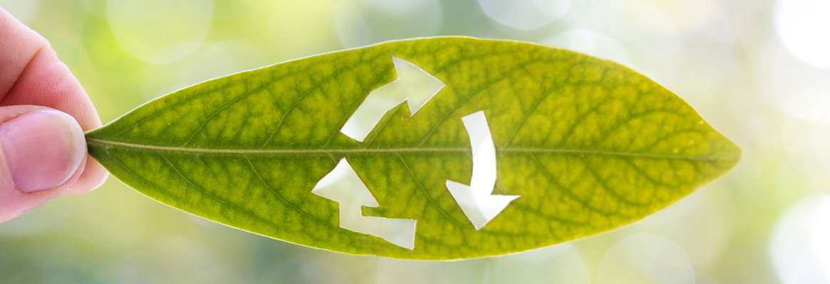 Apparel Industry: Starting a 'Go Green' Initiatives