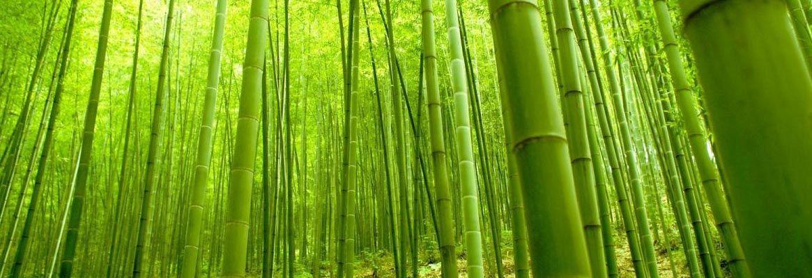 Bamboo Fibre