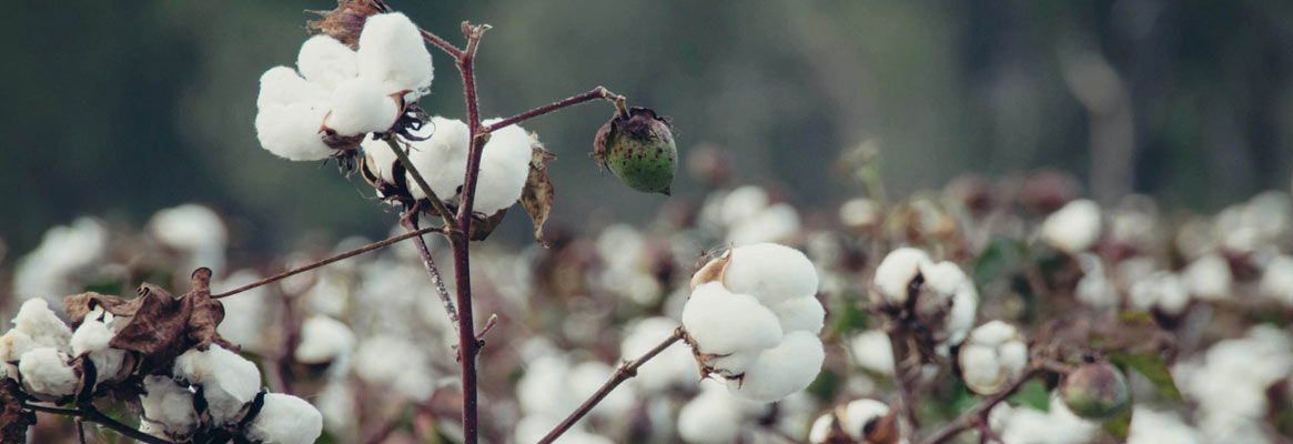 Biotechnology a Boon to Textile Industry