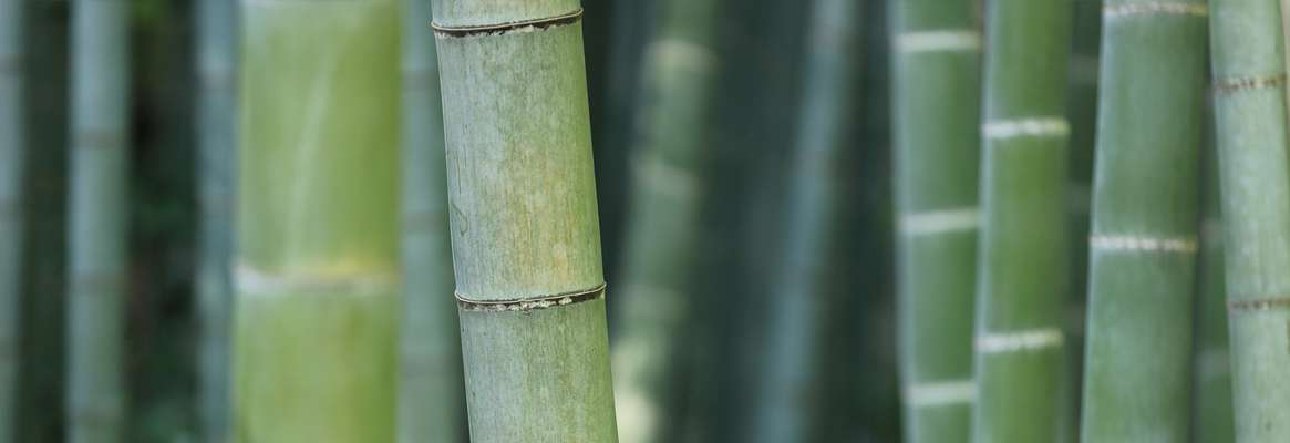 Bamboo Clothing for Green Wardrobes