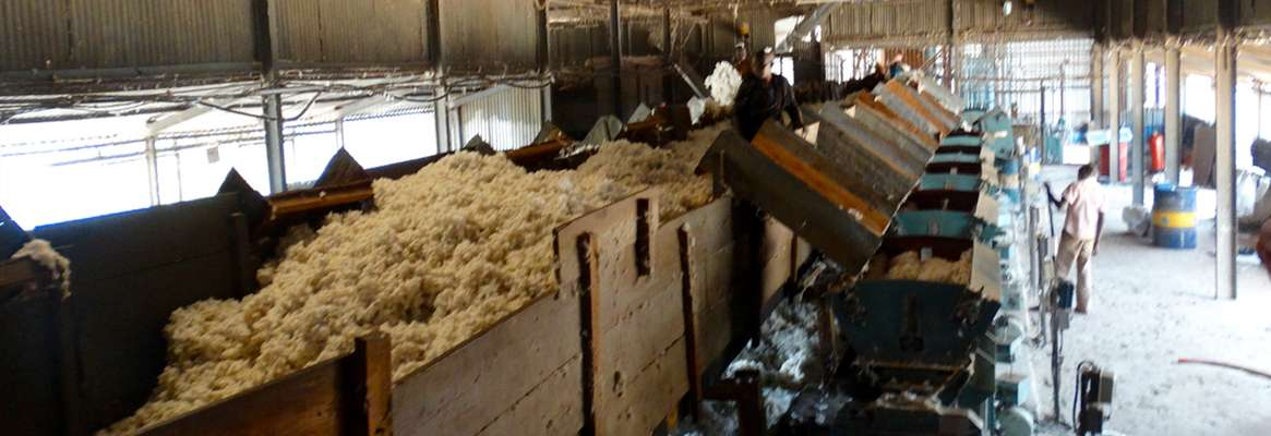 Measures to Reduce Cotton Contamination in Ginneries