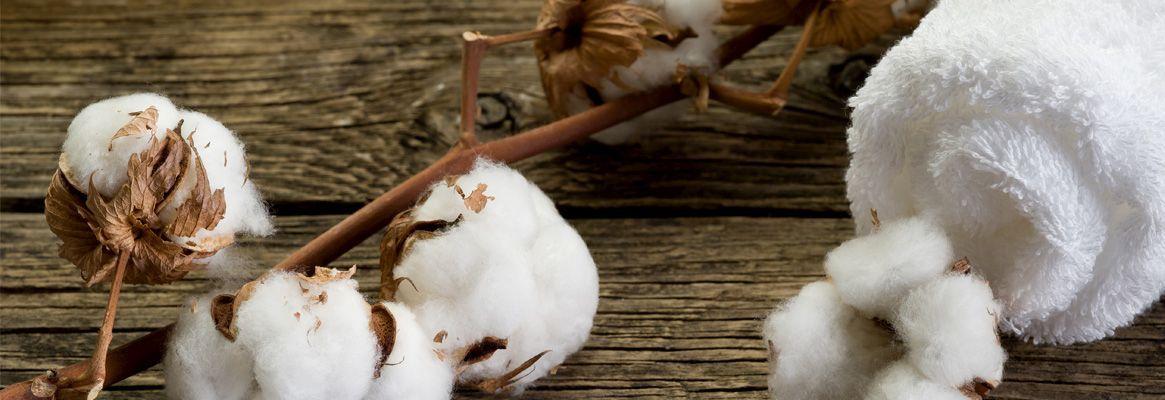 Blending Mesta with Natural Colour Cotton: A Novel Approach