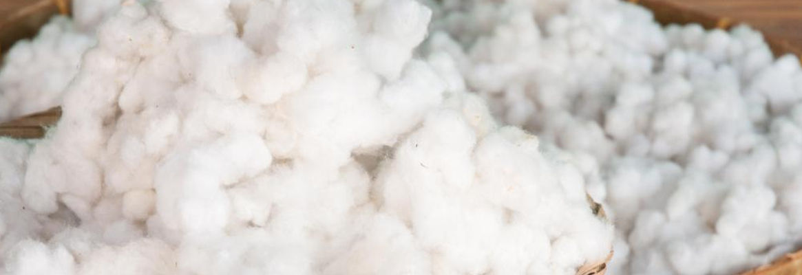 Crucial Cotton: Constraints and Confusion in 2010