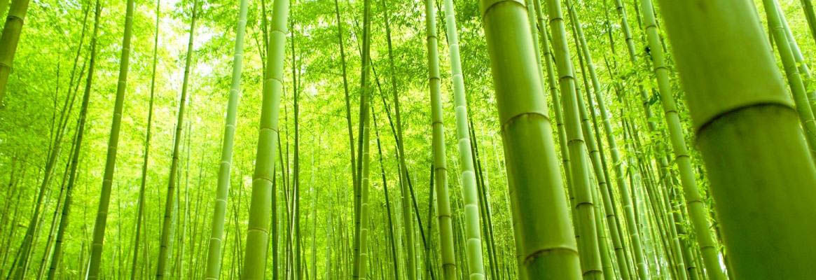 Bamboo Fibers and Its Applications
