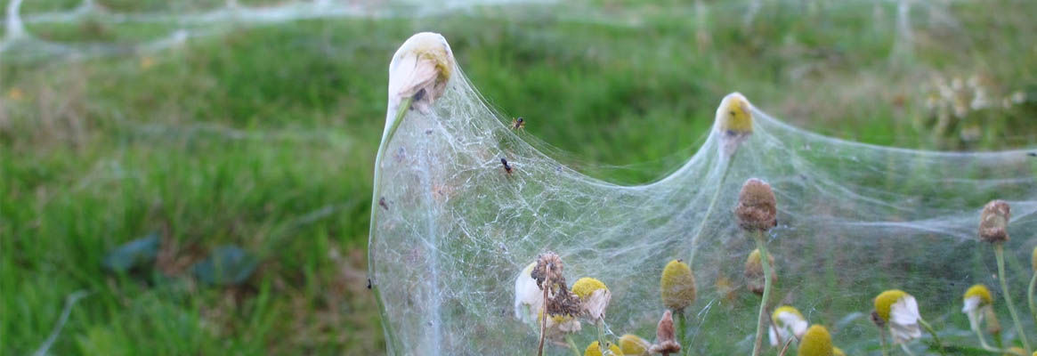 Gossamer : The Spider Silk