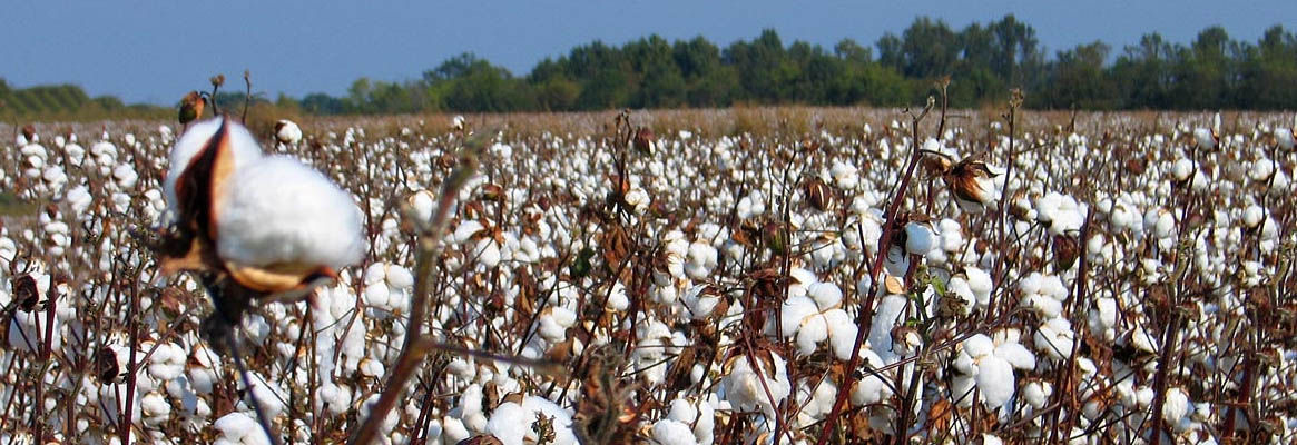 Liberalizing the cotton export restrictions - a review