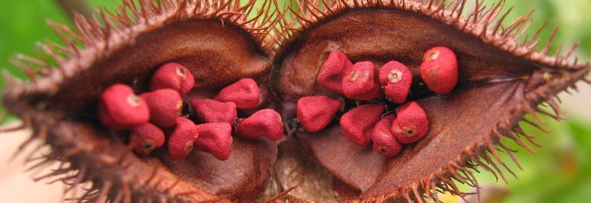 Study of Dyeing Behaviour and Antimicrobial Effect on Annatto Treated Material