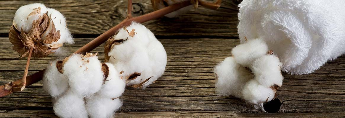 Organic Cotton Knitted Fabric vs. Regular Cotton Knitted Fabric