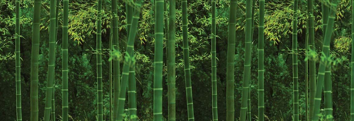 Bamboo Fibres - A Boon for Apparels