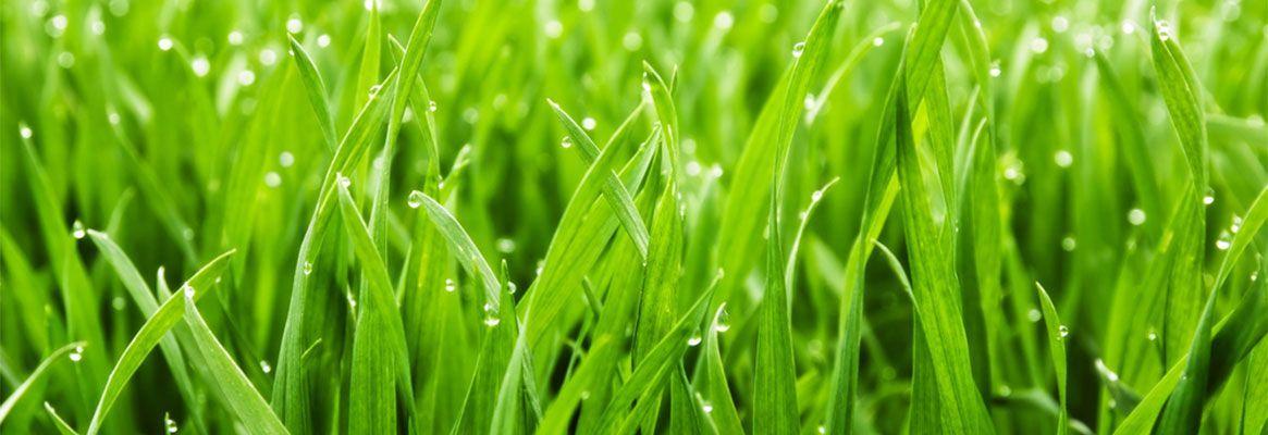 Sugarcane fibres: Eat it or Knit it!