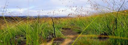 File:Elephant grass.jpg