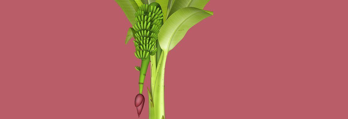 Banana Fibre: A revolution in textiles