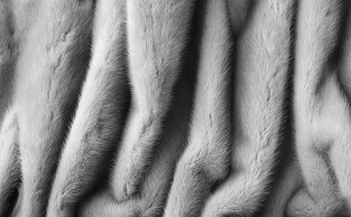Fur is flying