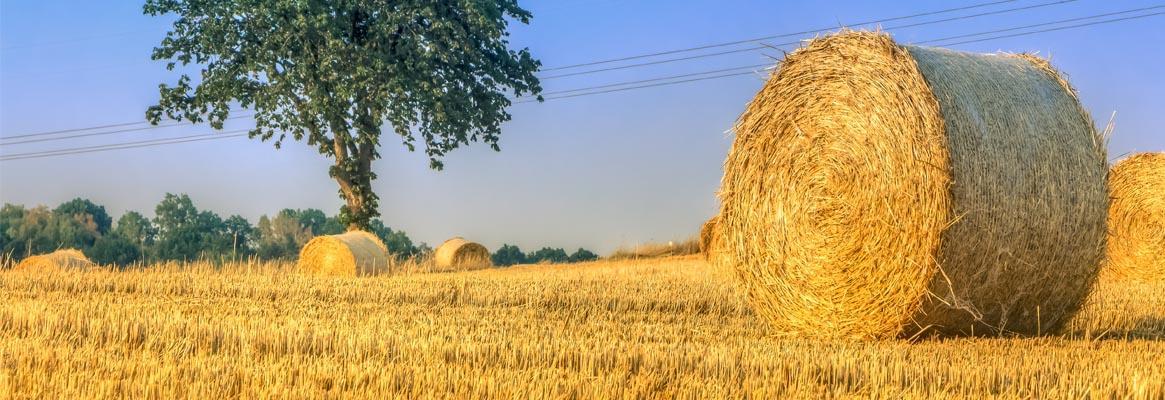 Corn-husk-fibre_big