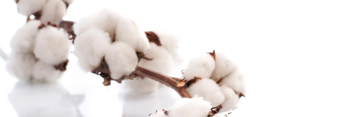 cotton_big