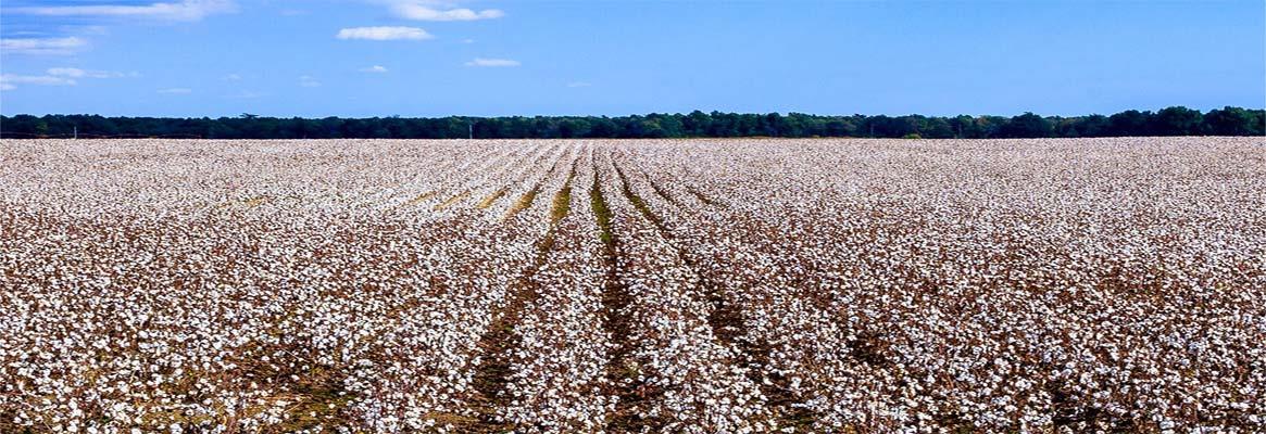 cotton-usa-big